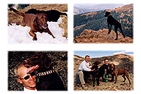 /images/133/2004-09-loveland-dogs1.jpg - #02135: Labrador Retrievers at Loveland Pass … Sept 2004 -- Loveland Pass, Colorado