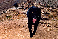 /images/133/2004-09-loveland-dogs8.jpg - #02142: Labrador Retrievers at Loveland Pass … Sept 2004 -- Loveland Pass, Colorado