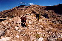 /images/133/2004-09-loveland-dogs9.jpg - #02143: Labrador Retrievers at Loveland Pass … Sept 2004 -- Loveland Pass, Colorado