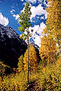 /images/133/2004-09-maroon-yellow-v.jpg - #02204: Maroon Bells in September … Sept 2004 -- Maroon Bells, Colorado