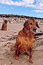 /images/133/2004-09-twinlakes-dogs01-v.jpg - #02209: Max and Ruby (Golden Retrievers) at Twin Lakes … Sept 2004 -- Twin Lakes, Colorado