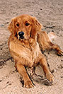 /images/133/2004-09-twinlakes-dogs02.jpg - #02223: Ruby (Golden Retriever) at Twin Lakes … Sept 2004 -- Twin Lakes, Colorado