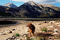 /images/133/2004-09-twinlakes-dogs07.jpg - #02228: Ruby (Golden Retriever) at Twin Lakes … Sept 2004 -- Twin Lakes, Colorado