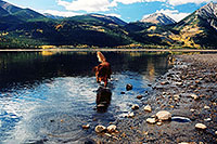/images/133/2004-09-twinlakes-dogs09.jpg - #02230: Max (Golden Retriever) at Twin Lakes … Sept 2004 -- Twin Lakes, Colorado