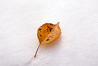 /images/133/2004-10-cent-snow-leaf.jpg - #02244: a lone leaf in Centennial … Oct 2004 -- Centennial, Colorado