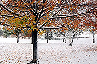 /images/133/2004-10-cent-snow-tree.jpg - #02245: images of Centennial … Oct 2004 -- Centennial, Colorado
