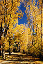 /images/133/2004-10-crested-almont1.jpg - #02276: Fall in Almont … October 2004 -- Almont, Colorado