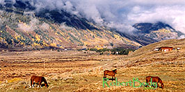 /images/133/2004-10-crested-horses-land-pano.jpg - #02294: horses grazing with Slate River Road in background and fog over the mountains … Oct 2004 -- Crested Butte, Colorado