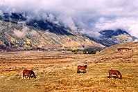 /images/133/2004-10-crested-horses-land.jpg - #02293: horses grazing with Slate River Road in background and fog over the mountains … Oct 2004 -- Crested Butte, Colorado
