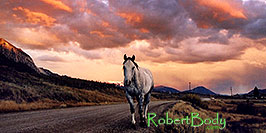 /images/133/2004-10-crested-sunset-horse-pano.jpg - #02309: horse walking home during evening on Slate River Road … Oct 2004 -- Crested Butte, Colorado
