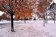 /images/133/2004-11-centennial-snow-trees.jpg - #02361: When fall turns to winter in Denver suburbs … Nov 2004 -- Centennial, Colorado