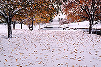 /images/133/2004-11-centennial-snow1.jpg - #02358: When fall turns to winter in Denver suburbs … Nov 2004 -- Centennial, Colorado