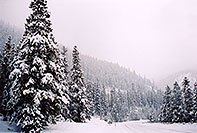 /images/133/2005-02-evans-snowy-road1.jpg - #02424: snowy trees by road before Mt Evans … Feb 2005 -- Mt Evans, Colorado