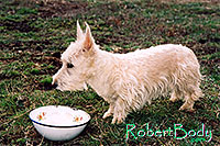 /images/133/2005-03-durango-abbie2.jpg - #02449: Abbie (Scottish Terrier) … March 2005 -- Durango, Colorado