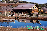 /images/133/2005-03-durango-house-pond1.jpg - #02454: morning … March 2005 -- Durango, Colorado