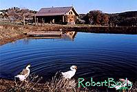 /images/133/2005-03-durango-lake-geese.jpg - #02455: Geese by the pond … March 2005 -- Durango, Colorado