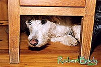 /images/133/2005-03-durango-max-chair2.jpg - #02470: Max (Scottish Terrier) hiding … March 2005 -- Durango, Colorado