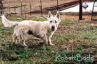 /images/133/2005-03-durango-max2.jpg - #02468: Max (Scottish Terrier) … March 2005 -- Durango, Colorado