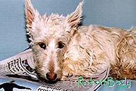 /images/133/2005-03-durango-sofa-abbie4.jpg - #02479: Abbie (Scottish Terrier) on a sofa … March 2005 -- Durango, Colorado