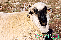 /images/133/2005-03-durango-timmy1.jpg - #02477: Timmy (Ram) … March 2005 -- Durango, Colorado