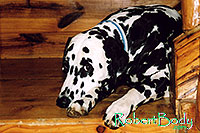 /images/133/2005-03-durango-xander1.jpg - #02492: Xander (Dalmation) lying on the stairs … March 2005 -- Durango, Colorado