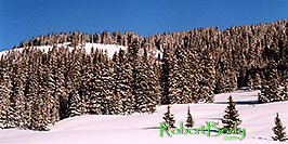 /images/133/2005-03-wolfcreek-top-tree1-pano.jpg - #02570: March at Wolf Creek Pass … March 2005 -- Wolf Creek Pass, Colorado