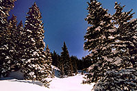 /images/133/2005-03-wolfcreek-trees2.jpg - #02569: March at Wolf Creek Pass … March 2005 -- Wolf Creek Pass, Colorado