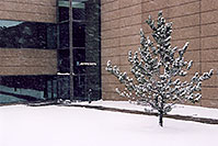 /images/133/2006-01-jep-building-tree.jpg - #02663: images of Jeppesen in Englewood … Jan 2006 -- Englewood, Colorado