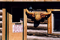 /images/133/2006-02-divide-cowboy-shack.jpg - #02703: Carved Longhorn Cow at Cowboy Kitchen Bar-B-Que … images of Divide … Feb 2006 -- Divide, Colorado