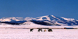 /images/133/2006-02-hartsel-snow-horses-pano.jpg - #02749: horses grazing on a cool winter day ... between Hartsel & Wilkerson Pass … Feb 2006 -- Wilkerson Pass, Colorado