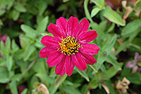 /images/133/2006-10-08-cent-flowers03.jpg - #02955: pink flower in Centennial … Oct 2006 -- Centennial, Colorado