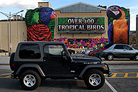 /images/133/2006-10-15-niag-birds02.jpg - #03011: Over 400 Tropical Birds … black Jeep Wrangler Rubicon ... images of Niagara Falls … Oct 2006 -- Niagara Falls, Ontario.Canada