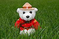 /images/133/2006-10-21-oak-bear01.jpg - #03068: White Canadian RCMP (Royal Canadian Mounted Police) bear in the grass … Oct 2006 -- Oakville, Ontario.Canada