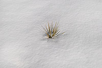 /images/133/2007-02-14-lone-grass.jpg - #03472: Grass peaking through the snow … Feb 2007 -- Lone Tree, Colorado