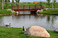 /images/133/2007-05-16-linc-pond02.jpg - #03784: duck and goose at Meridian Pond in Englewood … May 2007 -- Englewood, Colorado