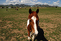 /images/133/2007-05-20-lake-horses02.jpg - #03797: Painted Horse in Lakewood, Colorado … Red Rocks in the background … May 2007 -- Lakewood, Colorado