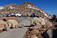 /images/133/2007-06-17-evans-goats-pho1.jpg - #03946: images of Mt Evans … June 2007 -- Mount Evans Road, Mt Evans, Colorado