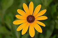 /images/133/2007-06-27-engle-flower-yellow.jpg - #04077: yellow flower in Englewood … June 2007 -- Englewood, Colorado
