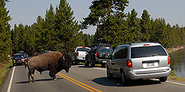 /images/133/2007-07-22-y-buff-water01-pa.jpg - #04307: Buffalo crossing the road and river to join the other buffalo … July 2007 -- LeHardys Rapids, Yellowstone, Wyoming