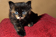 /images/133/2008-02-18-kittens-0225.jpg - #04784: Kittens in Tempe … Feb 2008 -- Tempe, Arizona