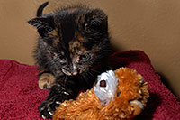 /images/133/2008-02-18-kittens-0262.jpg - #04786: Kittens in Tempe … Feb 2008 -- Tempe, Arizona