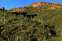 /images/133/2008-03-02-supers-2227.jpg - #04835: Saguaro Cactus in Superstition Mountains … March 2008 -- Superstitions, Arizona