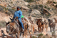 /images/133/2008-04-06-hav-m-terri-1516.jpg - #05121: Mules along Havasupai Trail … April 2008 -- Havasupai Trail, Havasu Falls, Arizona