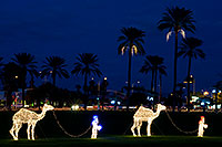 /images/133/2008-12-14-mesa-temple-caravan-64063.jpg - #06454: Camel Caravan - Mesa Temple Garden Christmas Lights Display … December 2008 -- Mesa Arizona Temple, Mesa, Arizona