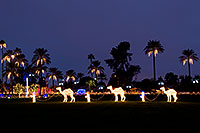 /images/133/2008-12-15-mesa-temple-caravan-64183.jpg - Camel Caravan and Palms
