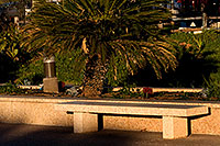 /images/133/2008-12-30-mesa-temple-bench-69703.jpg - #06685: Bench by Mesa Arizona Temple … December 2008 -- Mesa Arizona Temple, Mesa, Arizona