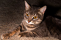 /images/133/2009-03-29-tempe-ella-101912.jpg - #07356: Ella, the loveable stray cat … April 2009 -- Tempe, Arizona