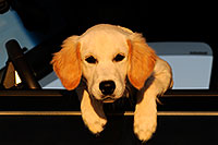 /images/133/2009-09-24-gilbert-morn-bella-112915.jpg - #07437: Bella (4 months old) in the car … September 2009 -- Gilbert, Arizona