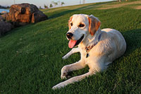 /images/133/2010-06-03-layton-bella-0969.jpg - #08076: Bella (1 year old) in Chandler … June 2010 -- Chandler, Arizona