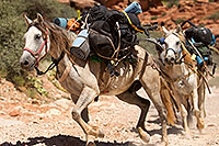 /images/133/2010-06-21-havasu-horses-7608.jpg - #08164: Along Havasupai Trail … June 2010 -- Havasupai Trail, Havasu Falls, Arizona